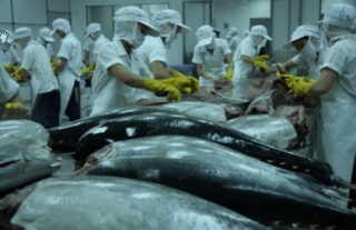 TUNA EXPORTS TO EU ON THE RISE